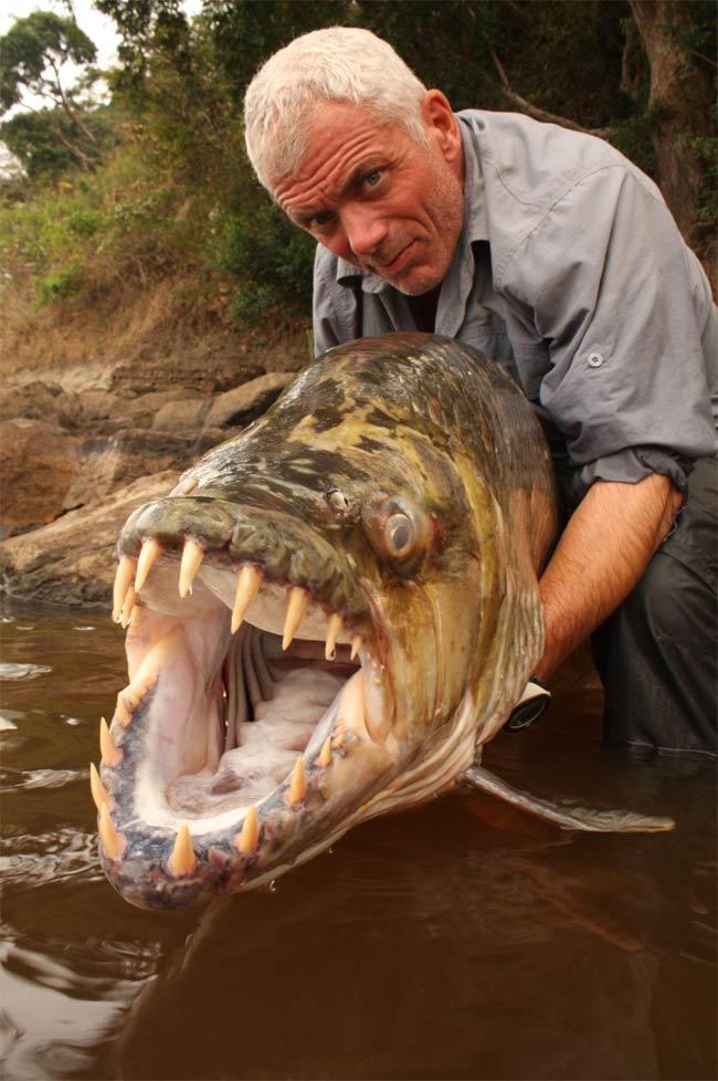"""Videonya dapat dilihat pada acara """"River Monster"""" di Animal Planet TV."""